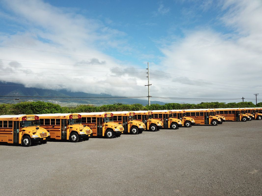 Line of school buses